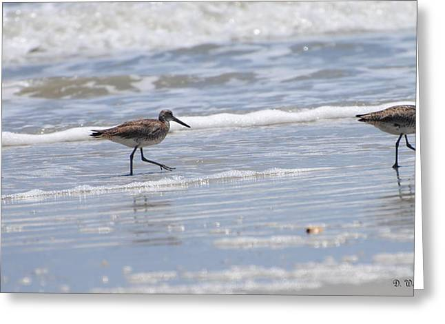 Ocracoke Shorebirds Greeting Card