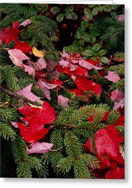 October Christmas Colors Greeting Card