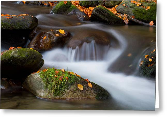 October Detail Greeting Card by Mircea Costina Photography