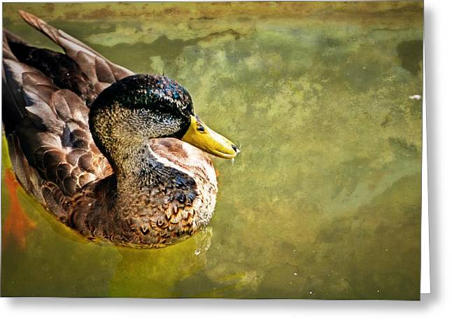 October Duck Greeting Card by Marty Koch