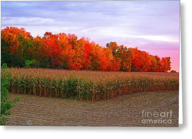 October Sunset On The Autumn Woods Greeting Card