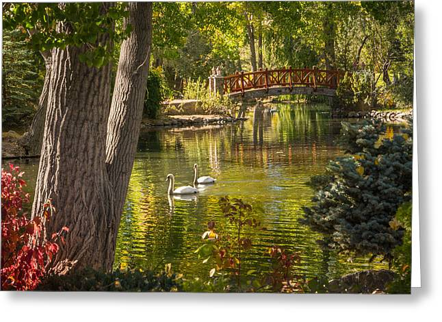 October Swans Greeting Card by Janis Knight
