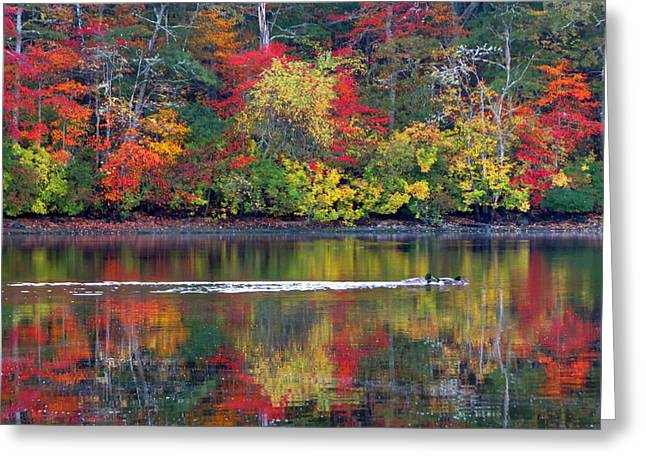 Greeting Card featuring the photograph October's Colors by Dianne Cowen