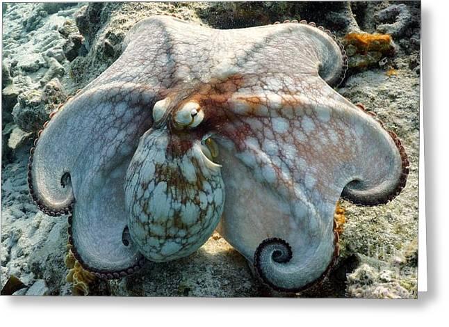Octopus Posing Greeting Card