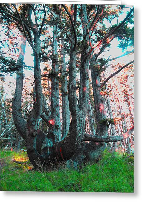 Octopus Tree  Greeting Card