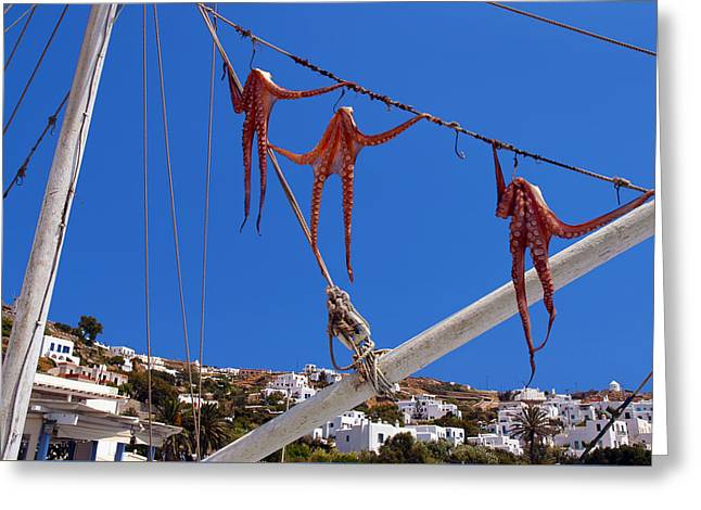 Octopus Trio Hanging In Mykonos Greece Greeting Card