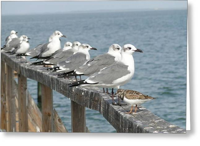 Odd Bird Out Greeting Card by Cindy Croal