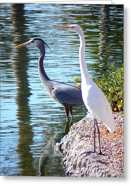 Greeting Card featuring the photograph Odd Couple by Deb Halloran