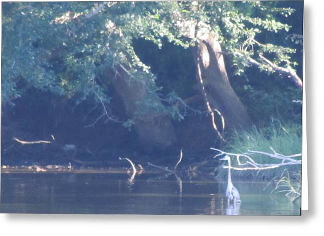 Ode The Great Blue Heron Greeting Card by Debbie Nester