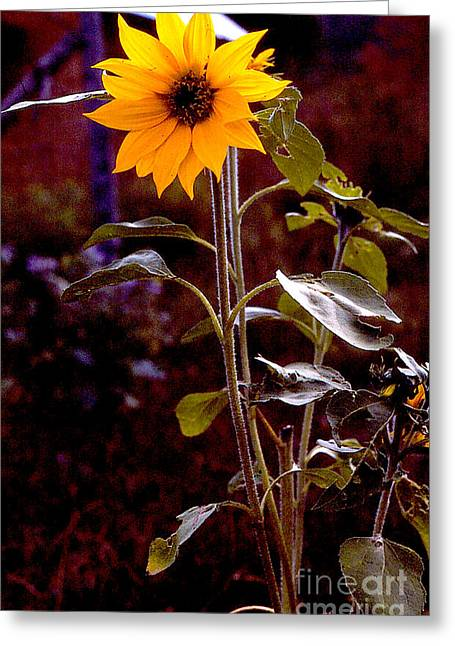 Ode To Sunflowers Greeting Card by Patricia Keller