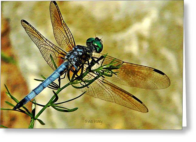 Odonata  Greeting Card by Chris Berry