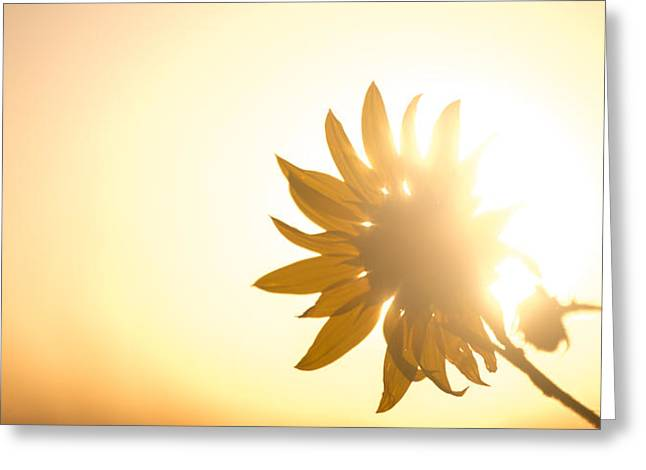 Of Sun And Flowers Greeting Card by Peter Tellone