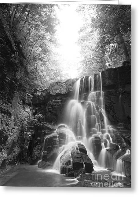 Off The Beaten Path Greeting Card by Michele Steffey