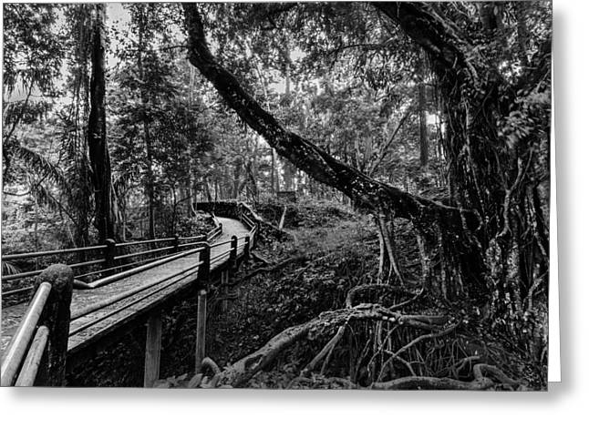 Off The Path Greeting Card by Julian Cook