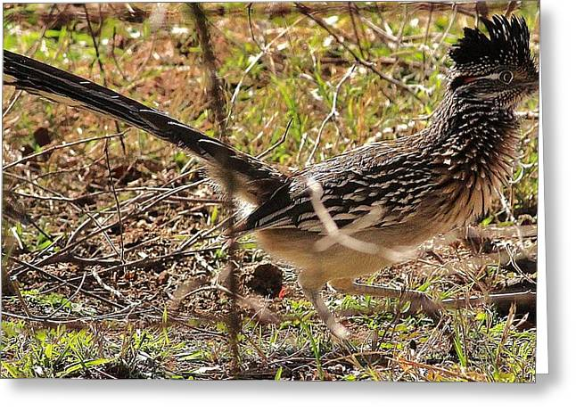 Off The Roadrunner Greeting Card by David Pauley