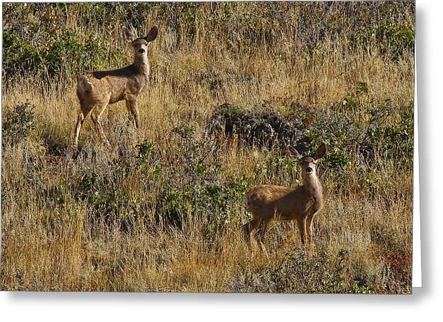 Oh Deer Greeting Card by Charles Warren