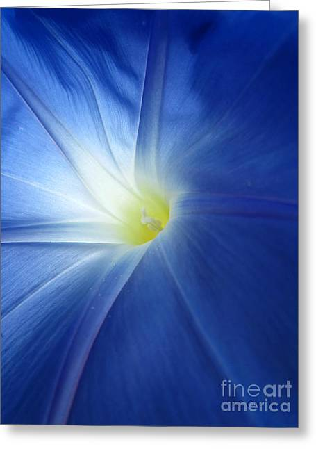 Oh Heavenly Blue 1 Greeting Card