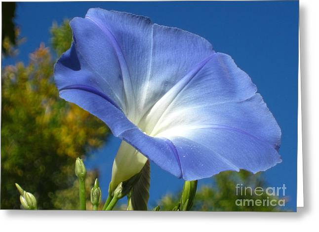 Oh Heavenly Blue 2 Greeting Card