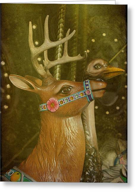 Oh My Deer Greeting Card by Jan Amiss Photography