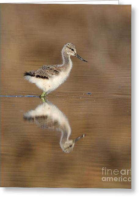 Oh So Sweet Avocet Chick Greeting Card by Ruth Jolly