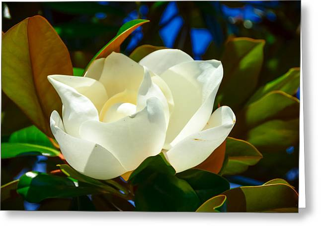 Oh Sweet Magnolia Greeting Card