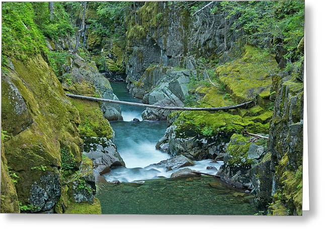 Ohanapecosh River, Silver Falls, Mount Greeting Card