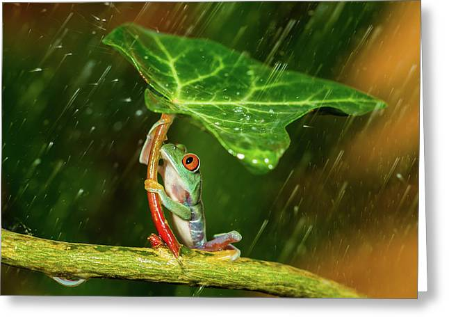 Ohh Noo :( It's Raining Greeting Card by Kutub Uddin
