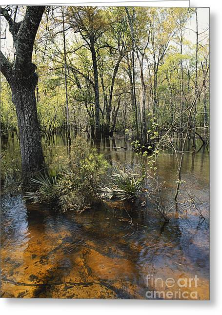 Ohoopee River, Georgia Greeting Card
