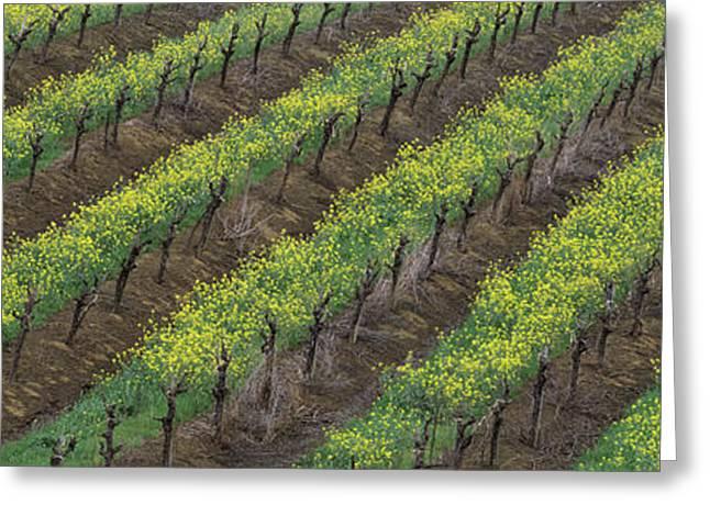 Oilseed Rape With Grape Vines Greeting Card