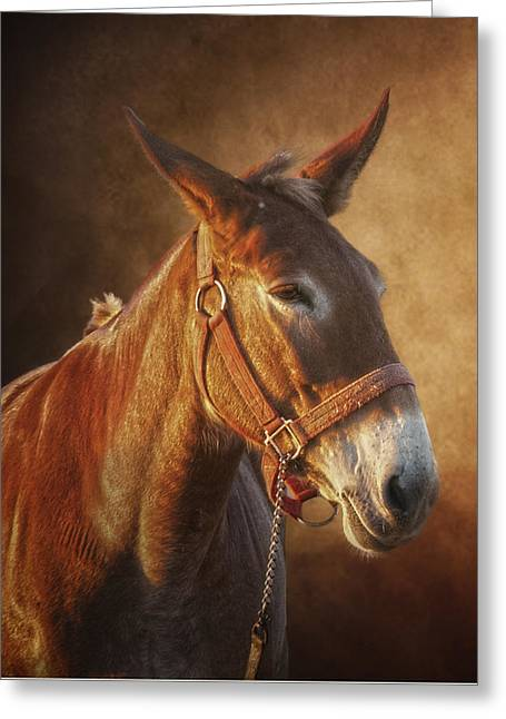 Ol Red Greeting Card by Ron  McGinnis