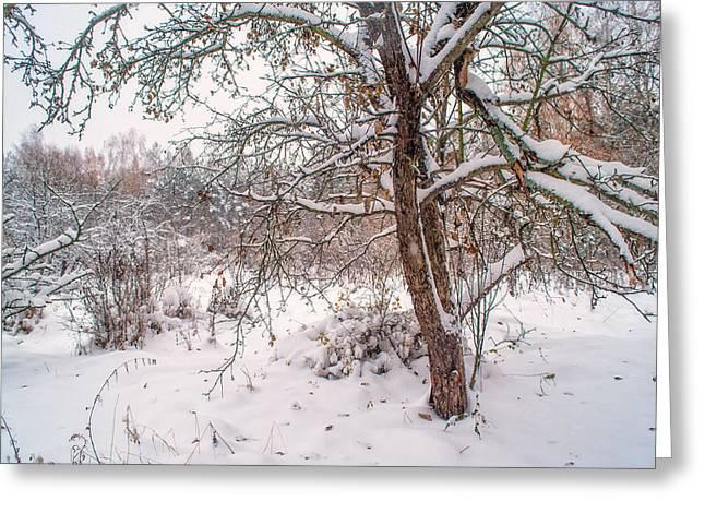Old Apple Tree In Winter Garden Greeting Card