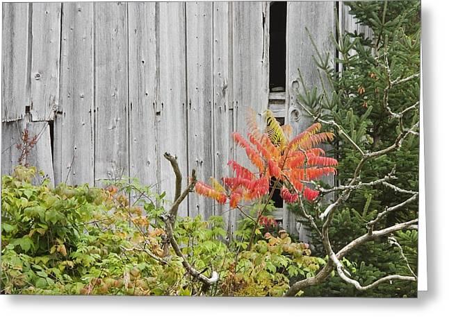 Old Barn In Fall Greeting Card