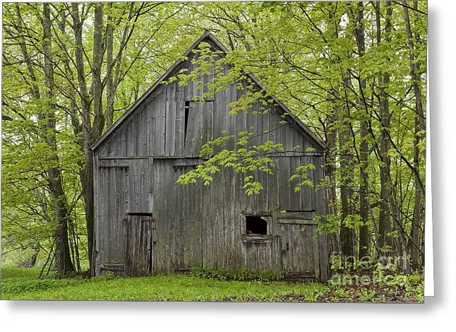 Old Barn In Spring Woods Greeting Card