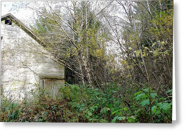 Old Barn In The Trees Greeting Card by Pamela Patch
