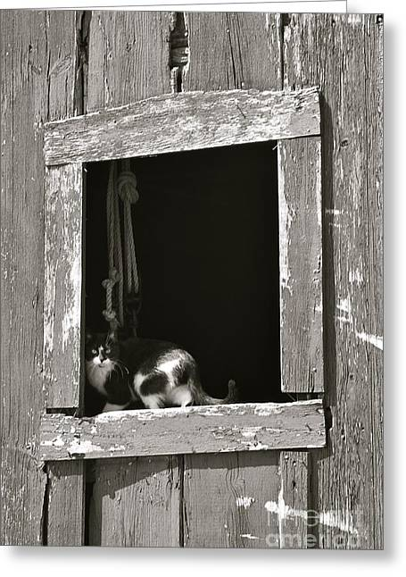 Old Barn Window Greeting Card