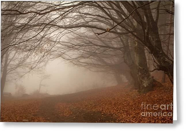 Old Beech Trees In Fog Greeting Card by Jivko Nakev