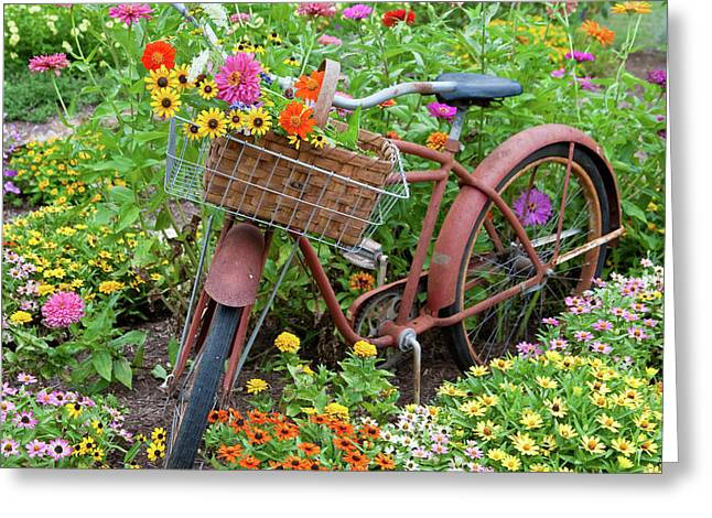 Old Bicycle With Flower Basket Greeting Card