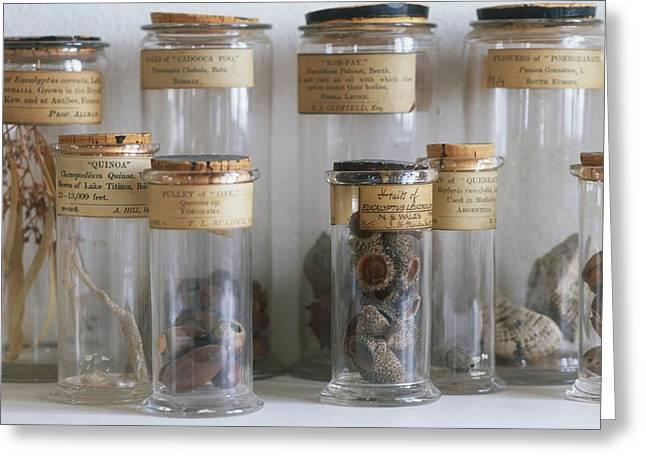 Old Botanical Specimen Jars Greeting Card