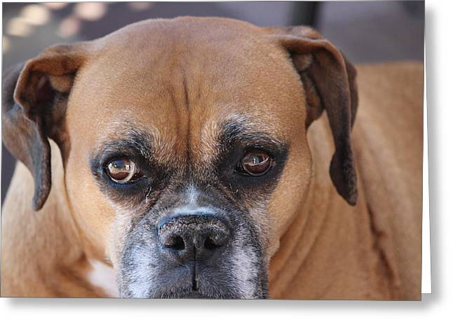 Old Boxer Greeting Card by John Greco