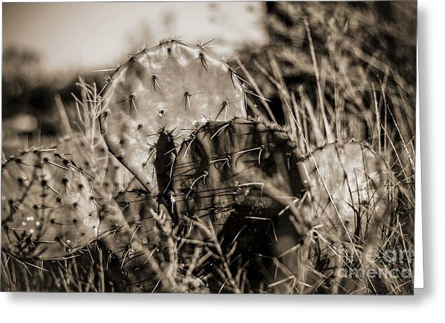 Greeting Card featuring the photograph Old Cactus by Amber Kresge