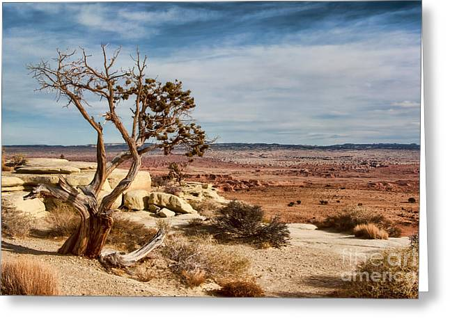 Old Desert Cypress Struggles To Survive Greeting Card by Michael Flood