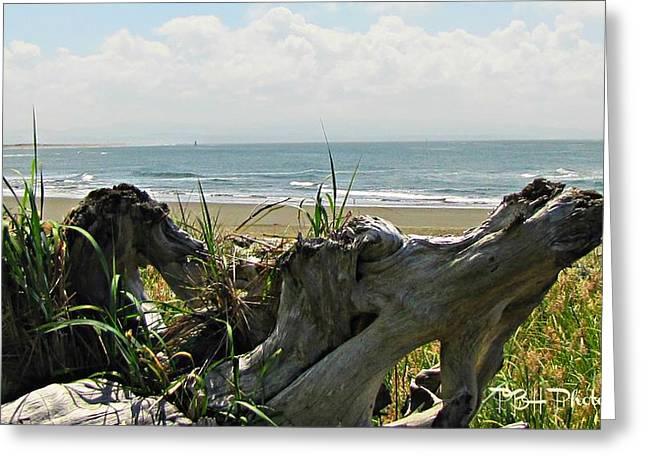 Greeting Card featuring the photograph Old Driftwood by Deahn      Benware