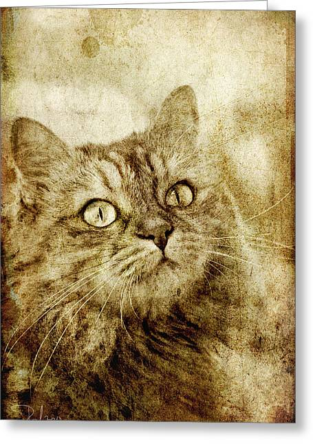 Old Fashion Cat Greeting Card