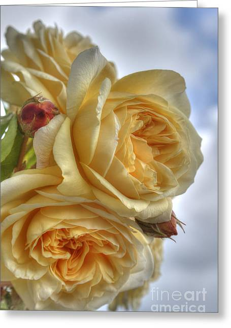 Old Fashion Roses Greeting Card