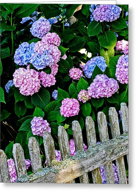 Old Fashioned Cape Cod Greeting Card by Sandy Dimke