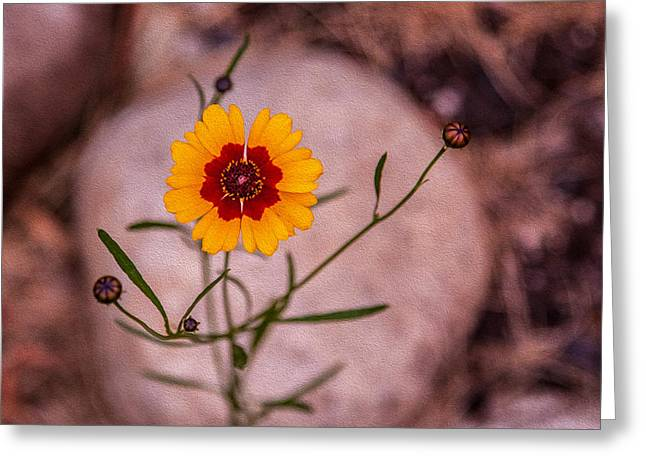 Old Fashioned Flower Greeting Card by Omaste Witkowski