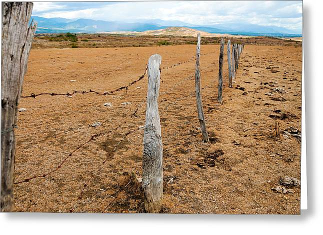 Old Fence Posts Greeting Card