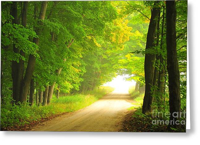 Old Forest Road In Autumn Greeting Card by Terri Gostola