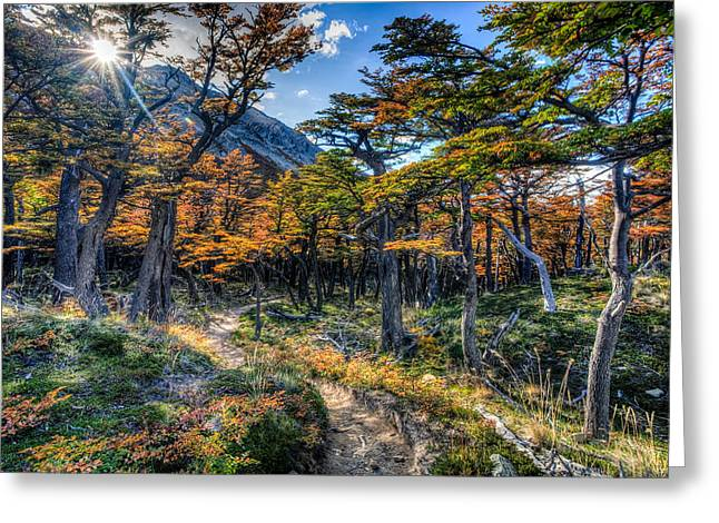 Old Forest Greeting Card by Roman St