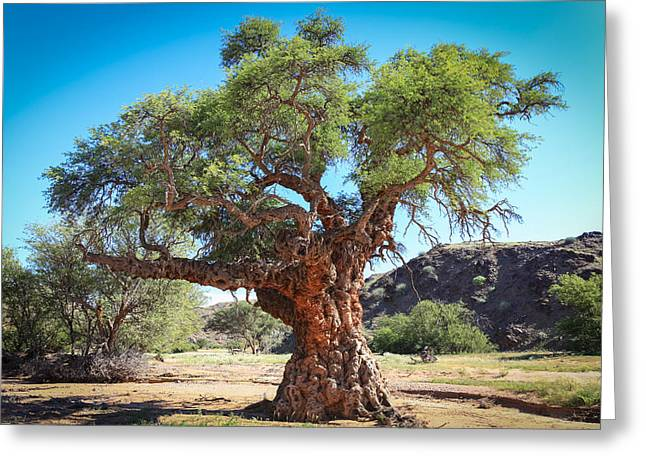 Old Gnarled Tree Greeting Card